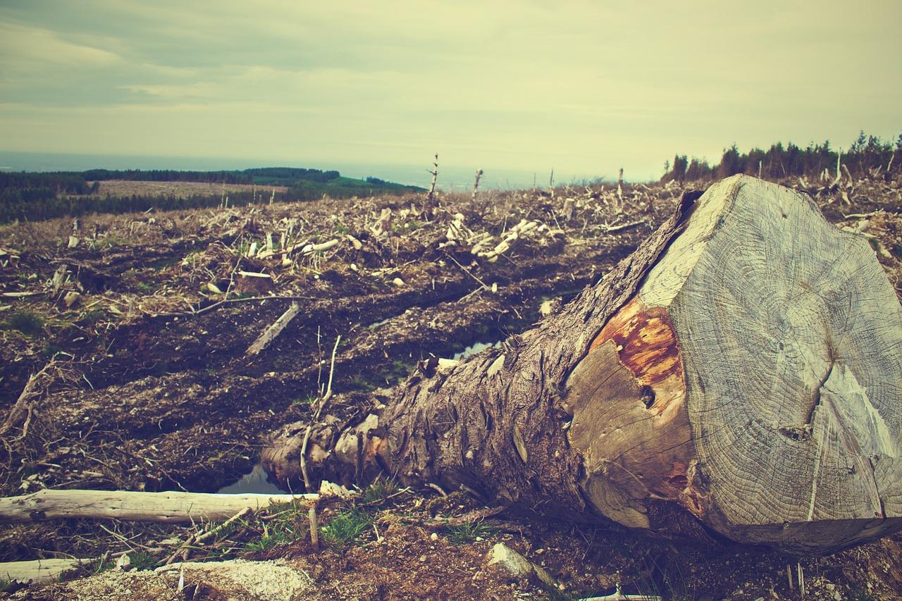 penggundulan hutan