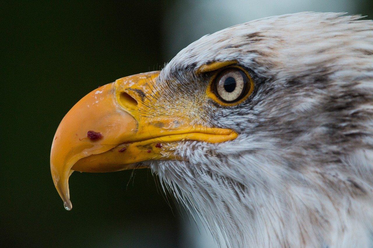 idiom eagle eye