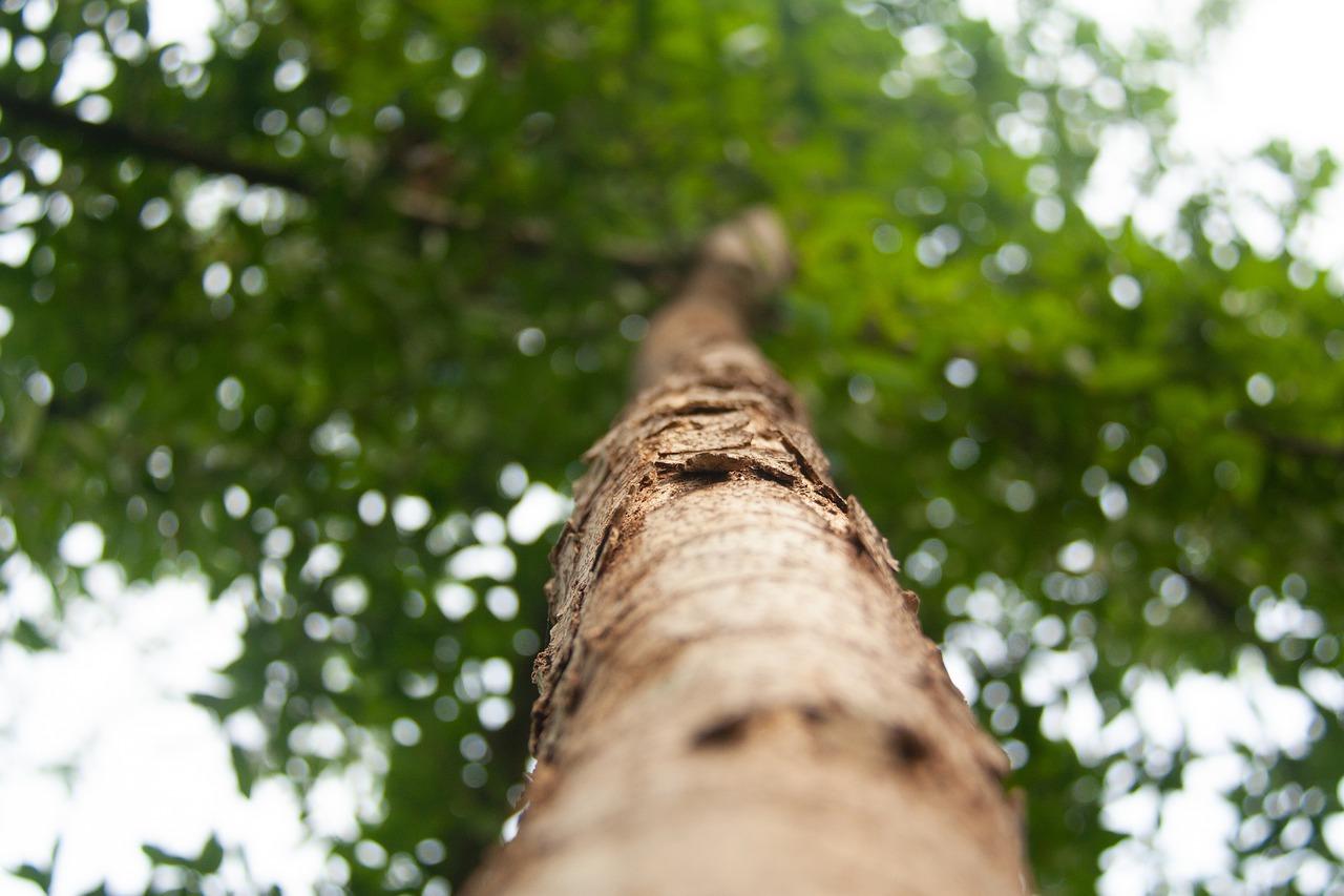 rewilding forest