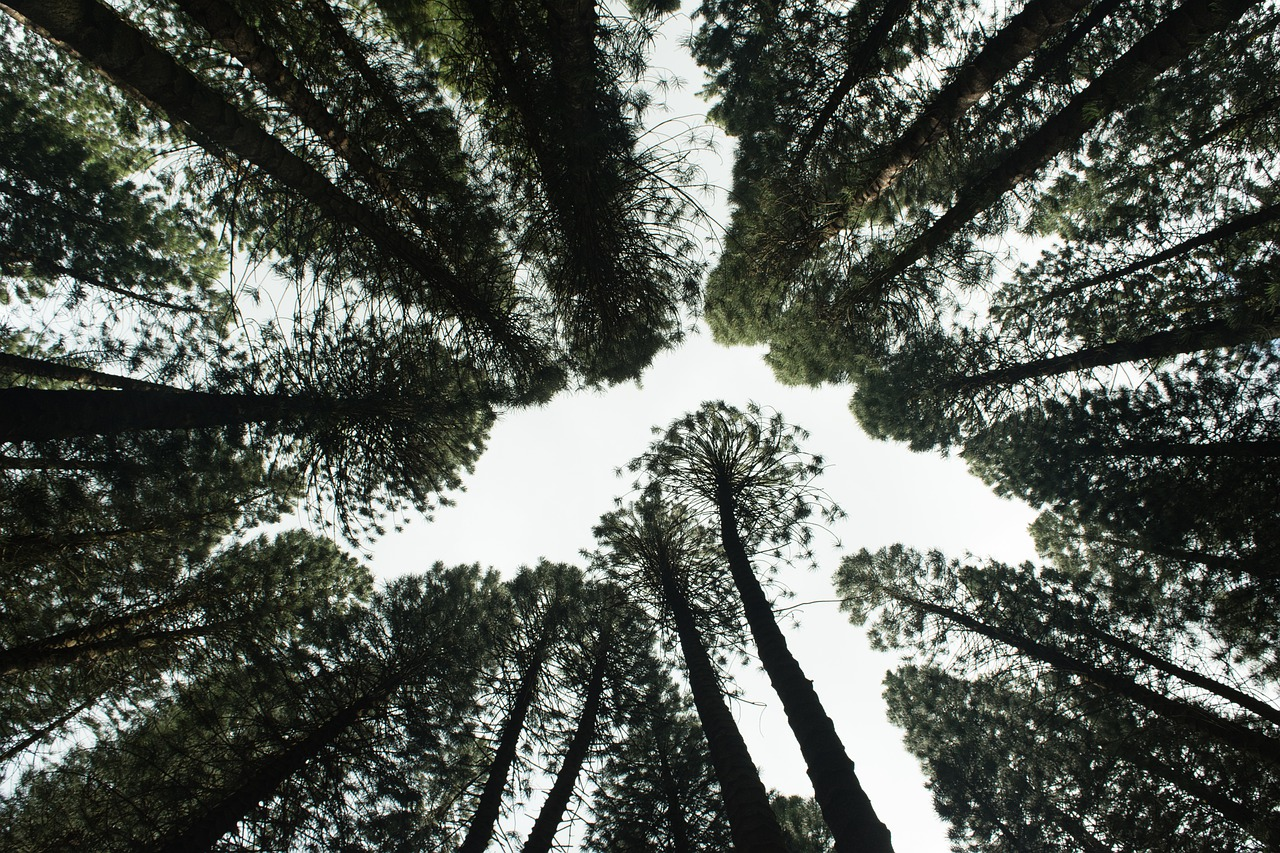 reboisasi hutan