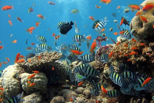 hewan laut