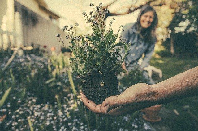 menanam tanaman